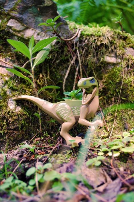 Raptor01WEB